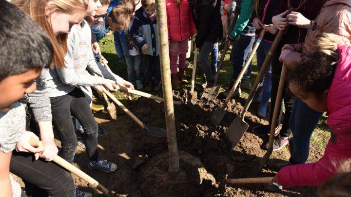 Arnhemmers maken kans op gratis boom of vogelhuisje