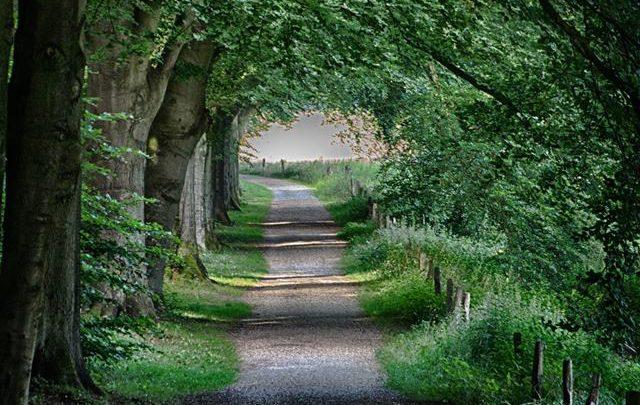 Arnhem koestert zijn bomen